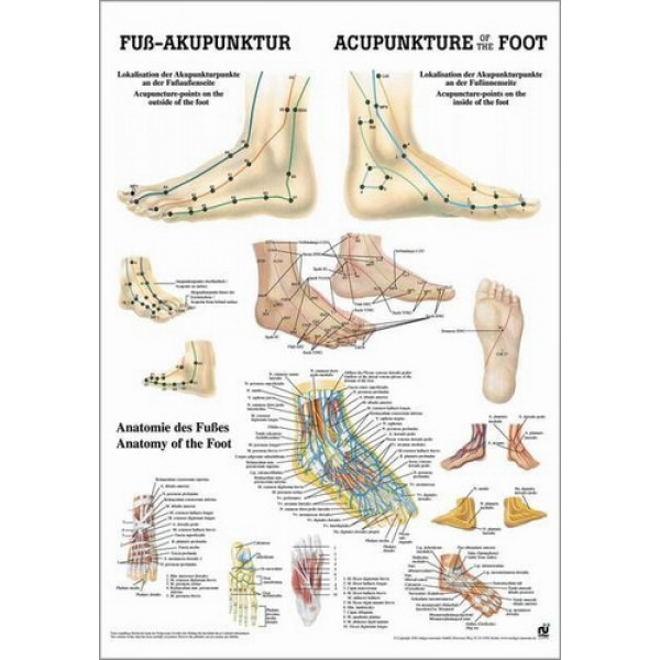 Acupuncture of the Foot Poster 50x70cm Laminated