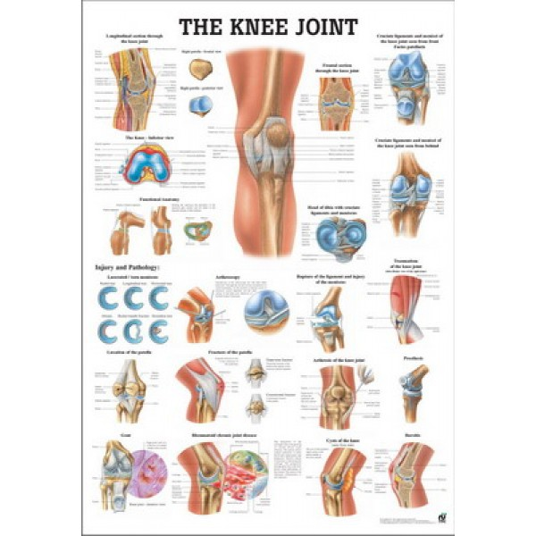 The Knee Joint Poster 70x100cm Laminated