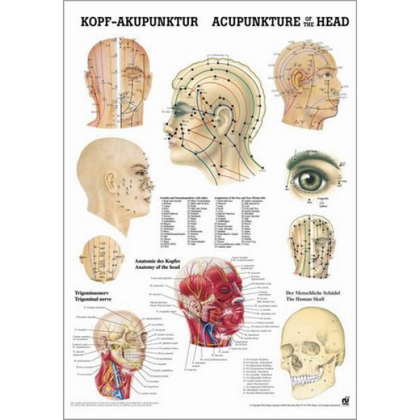Acupuncture of the Head Poster 50x70cm Laminated